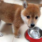 食欲旺盛!育ち盛りの子犬ちゃん。