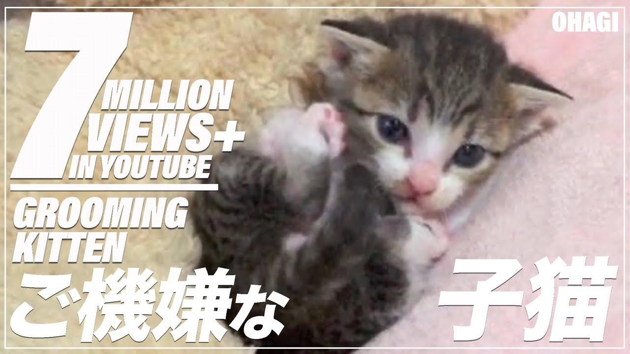 きれいきれいするもん!な子猫の動画