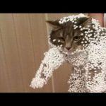 猫好きなら一度は体験?!かわいい猫の面白パプニング画像ww