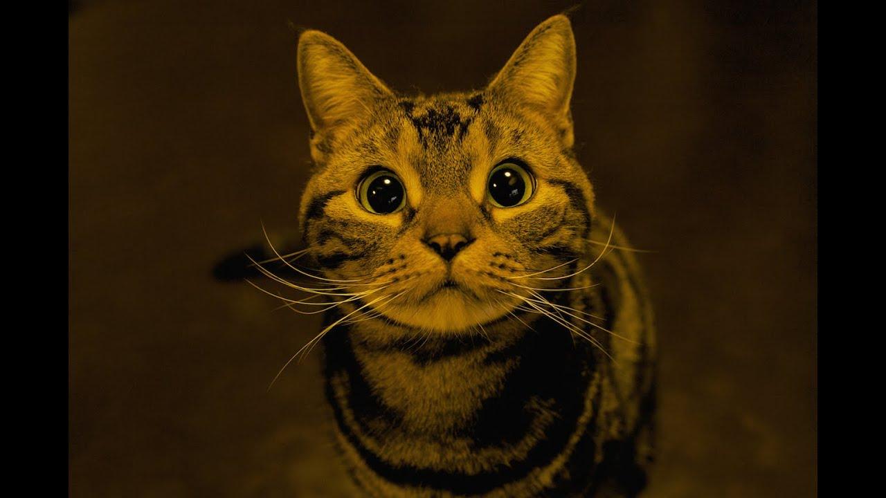 「ごはん!」とおねだりするイケメン子猫ちゃん動画♪