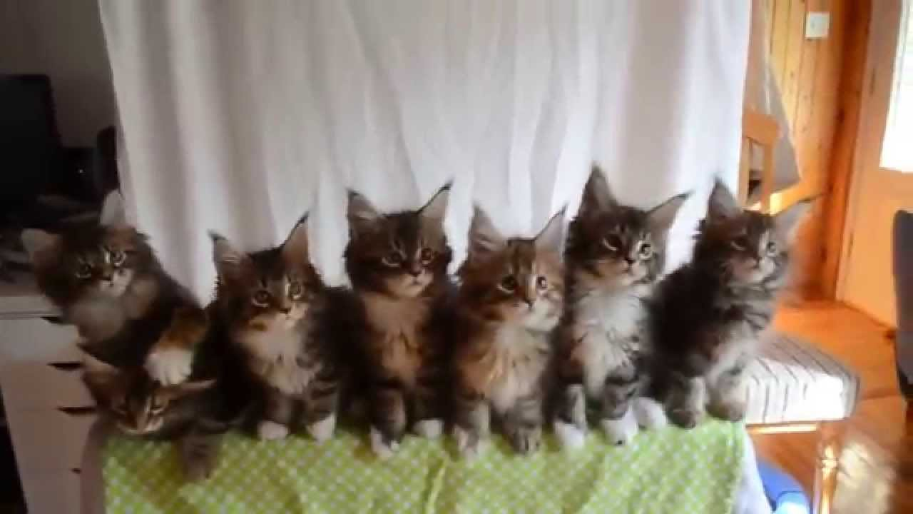 ニャンとも見事!シンクロする7匹の子猫たち♪